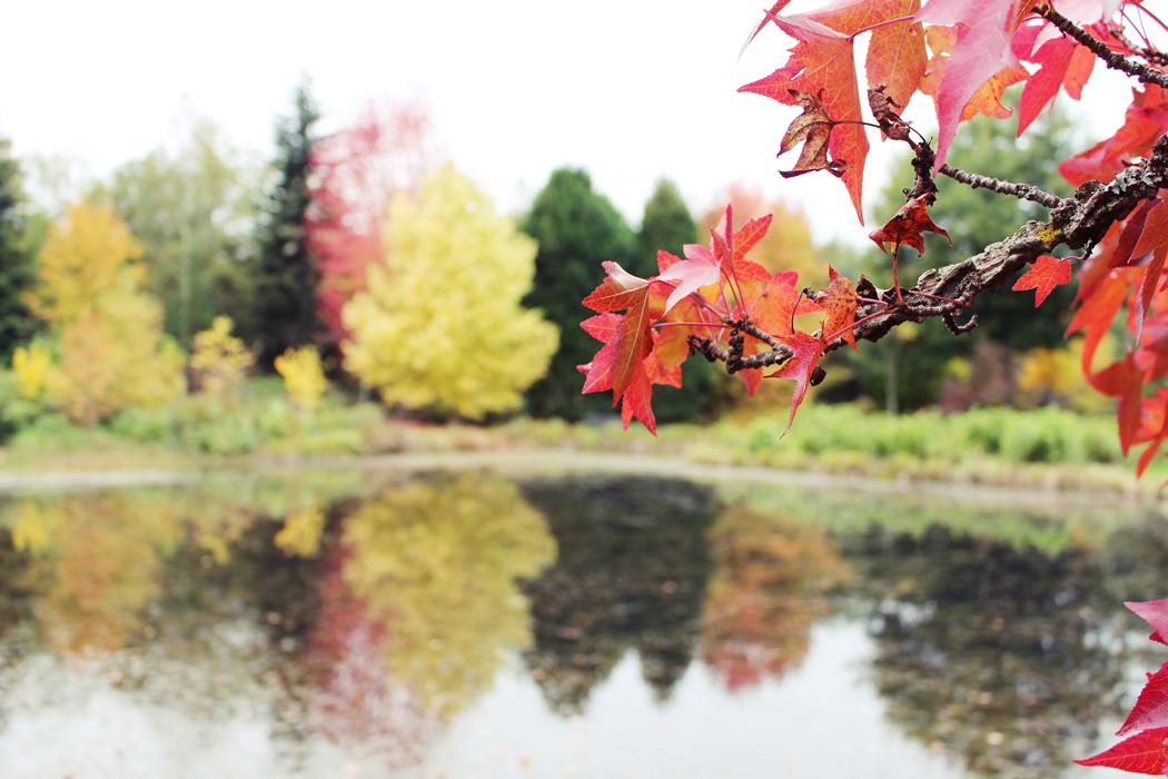arboretum-grandes-bruyeres-loiret
