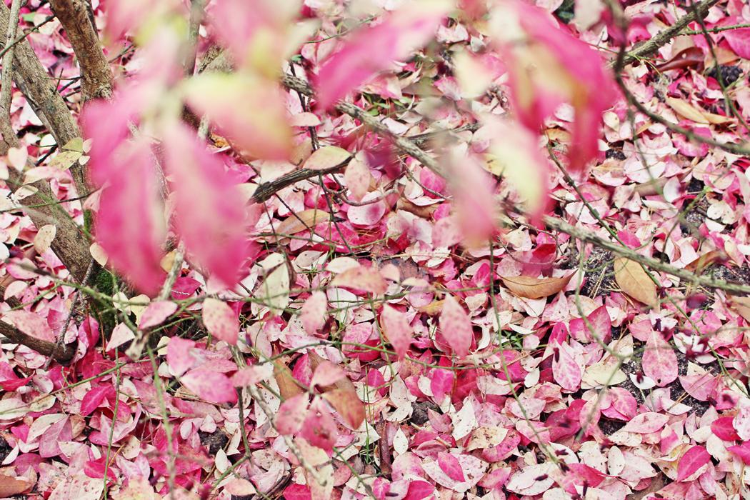 arboretum-grandes-bruyeres-tourisme-loiret-10