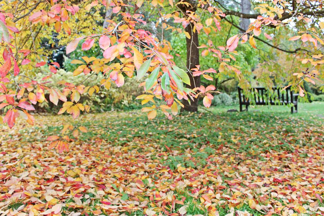 arboretum-grandes-bruyeres-tourisme-loiret-11