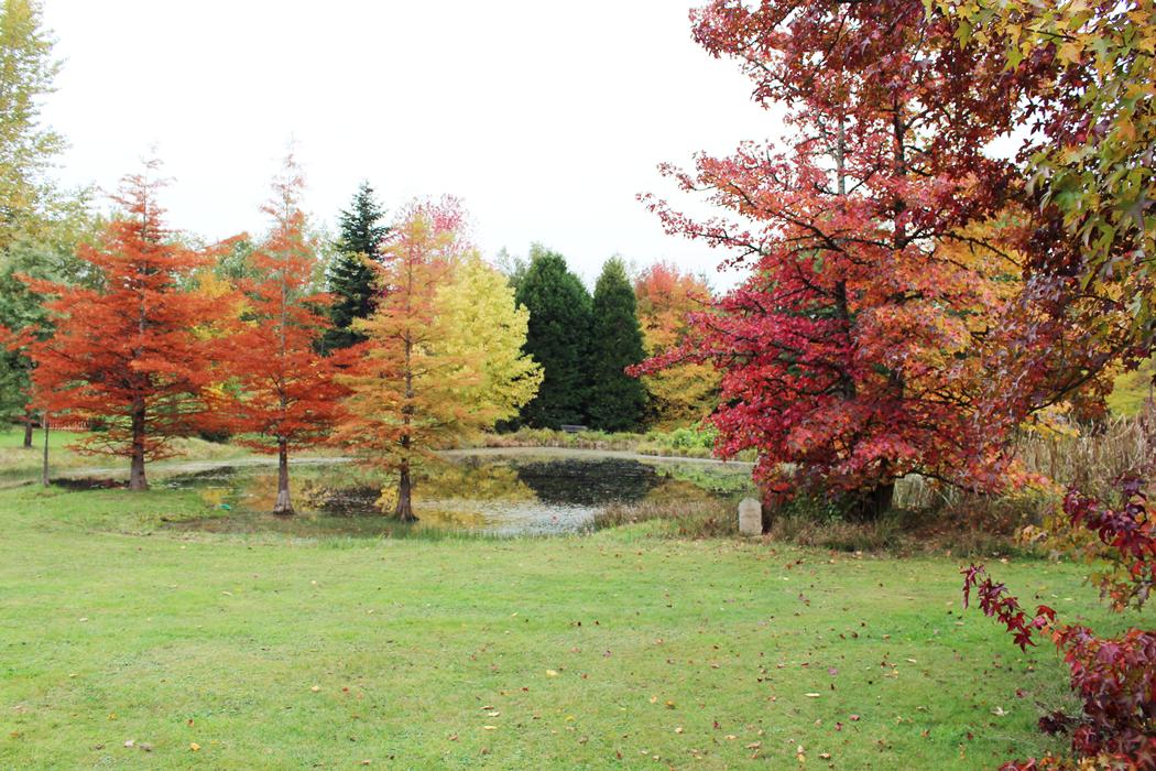 arboretum-grandes-bruyeres-tourisme-loiret-12