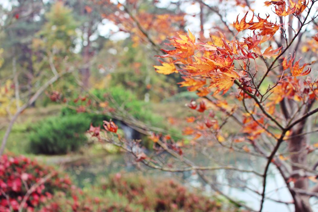 arboretum-grandes-bruyeres-tourisme-loiret-2