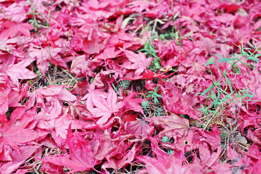 arboretum-grandes-bruyeres-tourisme-loiret-3