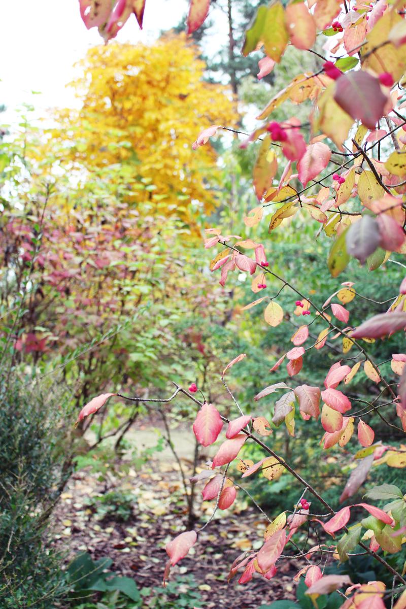arboretum-grandes-bruyeres-tourisme-loiret-7