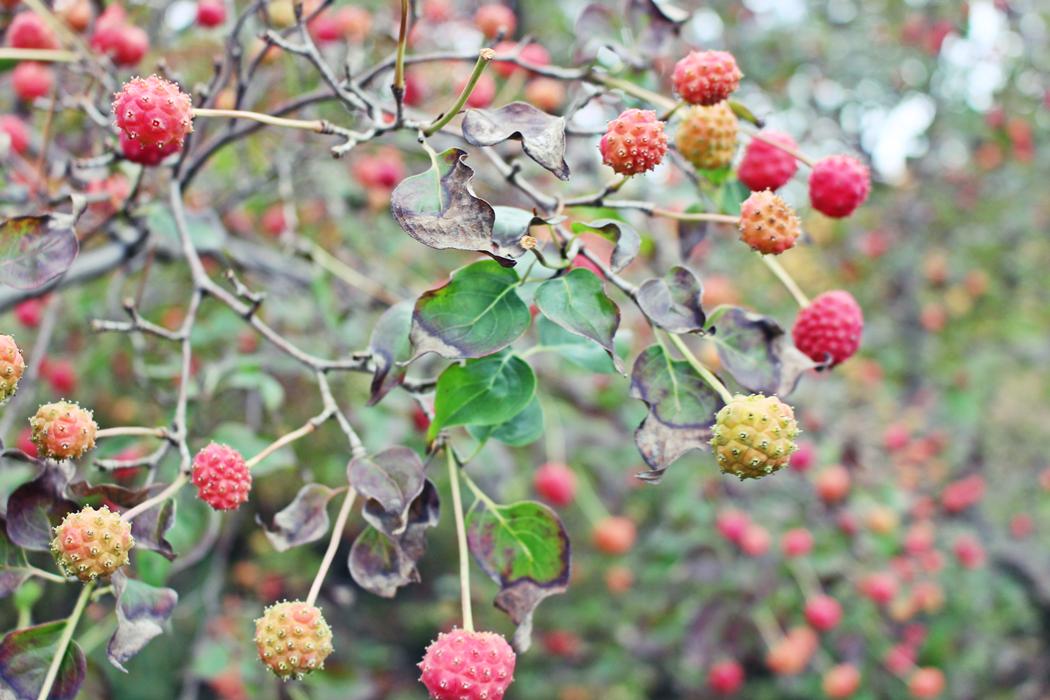 arboretum-grandes-bruyeres-tourisme-loiret-8
