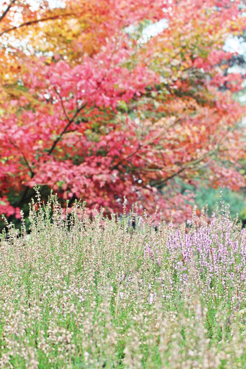 arboretum-grandes-bruyeres-tourisme-loiret-9